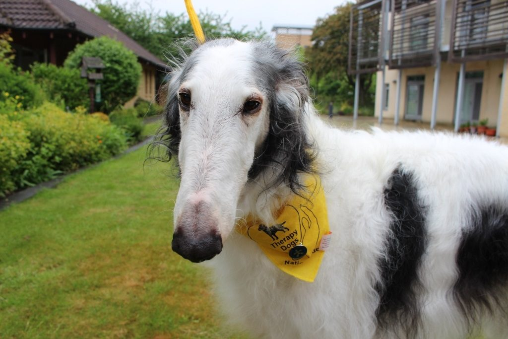 Hospice therapy dog receives Long Service Award for volunteering