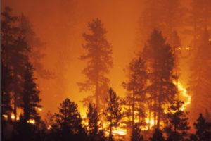Wild fires causing devastation.