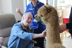 Patient with alpaca
