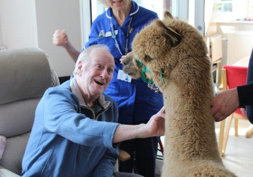 Patient with alpaca