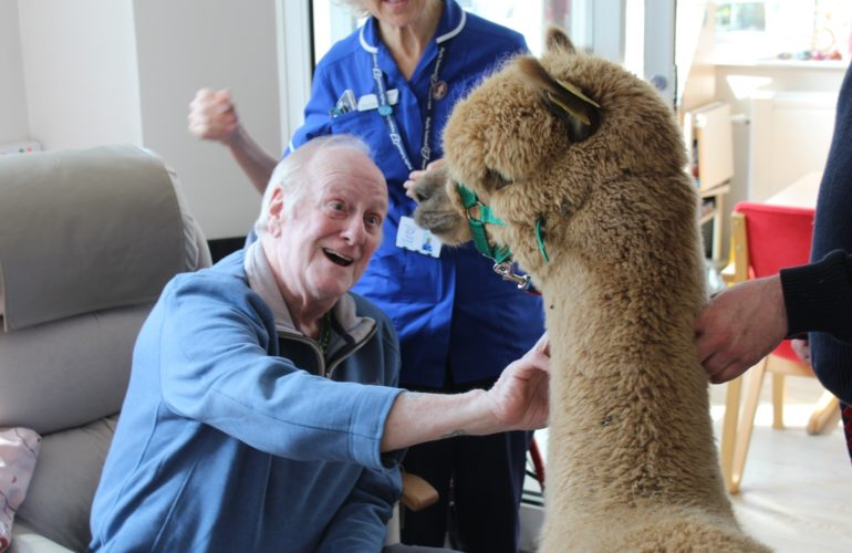 Meet the animal therapists bringing smiles to hospice patients