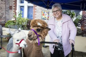 PICTURE BY CHRIS BULL FOR ST ANN'S HOSPICE   9/10/19  Alpacas visit St Ann's Hospice , Heald Green.  www.chrisbullphotographer.com