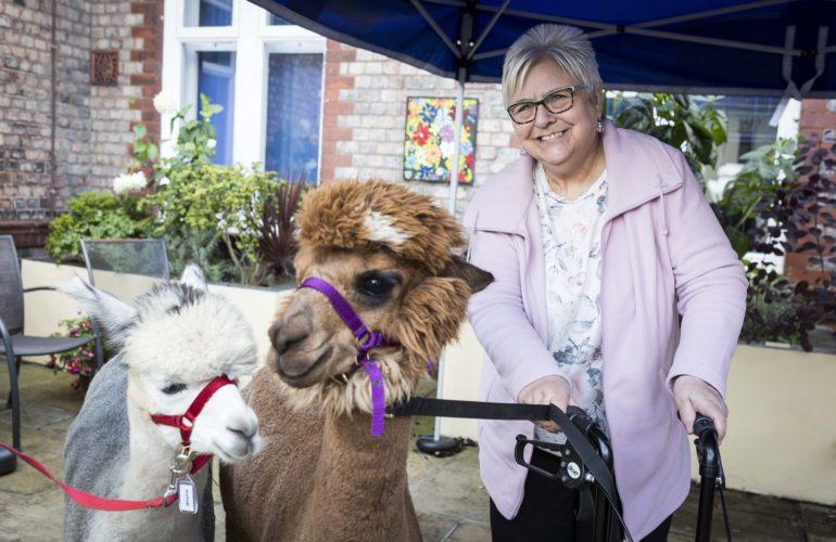 Hospice patients receive surprise visit from two friendly alpacas