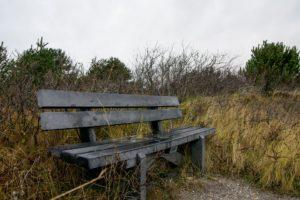 wooden bench in quiet forest