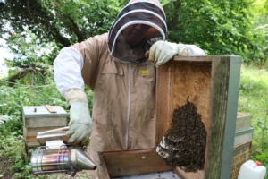 Sue Ryder volunteer and bee keeper Mike Sumner has been carefully tending the hives